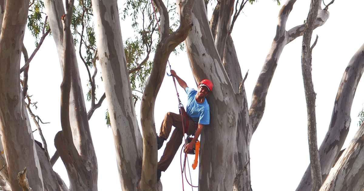 charles-in-tree