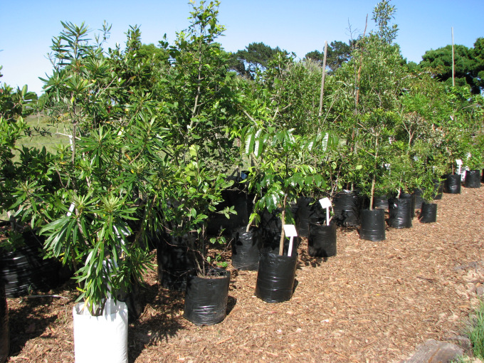 Young trees now available at Ouland Nursery.
